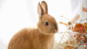 rabbit names that are autumn-inspired