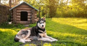 Dog Backyard Ideas