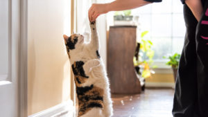 Improving Treat Time: 6 Ways to Step Up Your Cat Treats Game