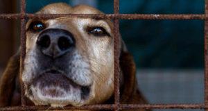 Animal Shelter Donations