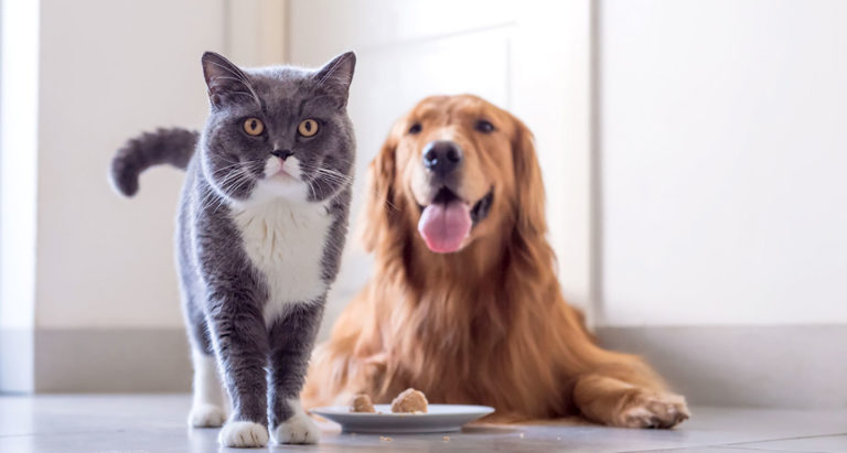 Prescription Pet Food for Dogs and Cats