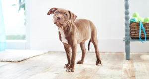 New Dog Product Checklist for Every Life Stage