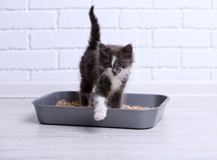 Kitten walking out of litter box