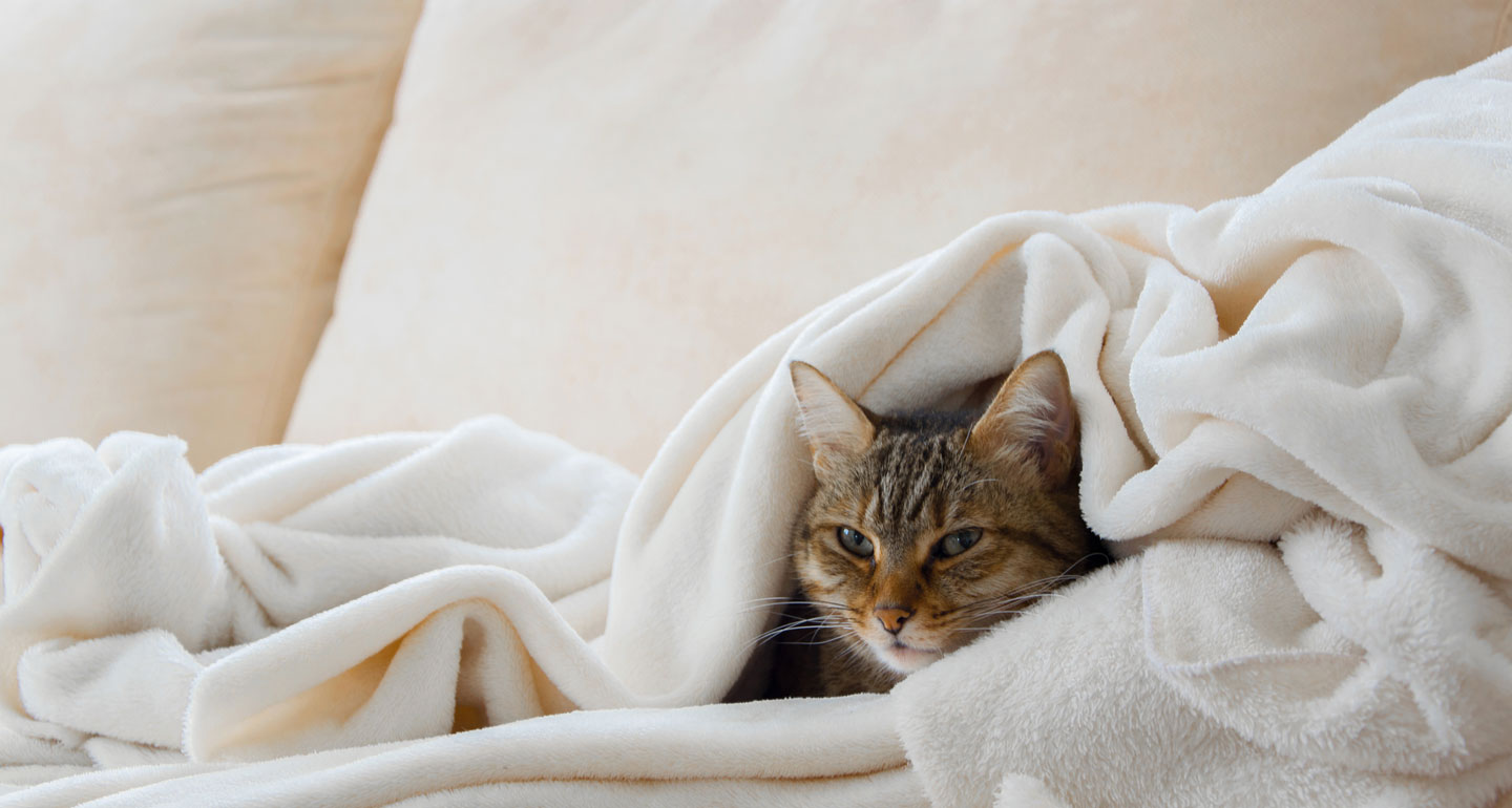 Keeping pets warm in the winter - cat snuggle in blanket