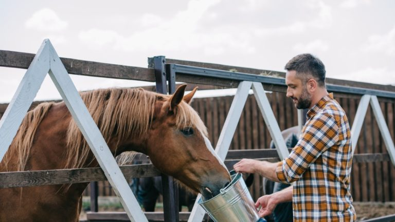 9 Types of Horse Supplements