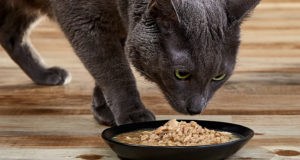 High-protein cat food