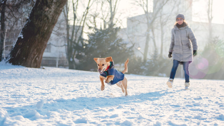 Dog playing outside in winter