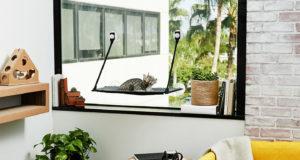 Cat-Friendly Apartments