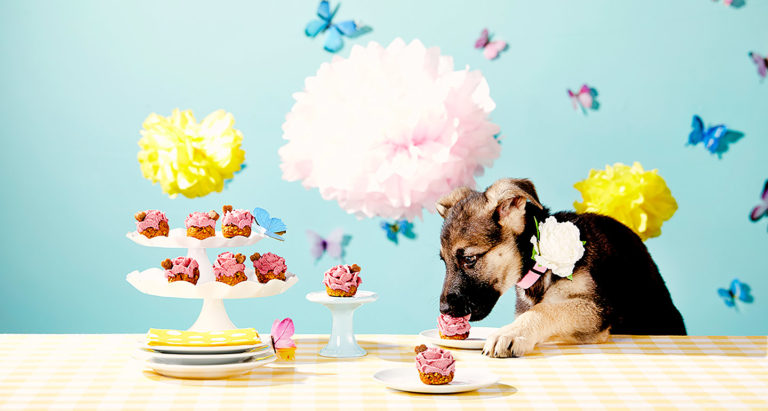 DIY Dog Treat Recipe: Springtime Pup-Cakes