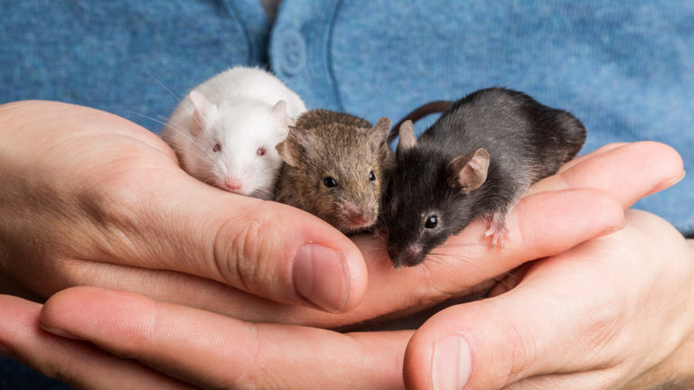 Pet mice together