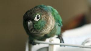 Bird beak wiping