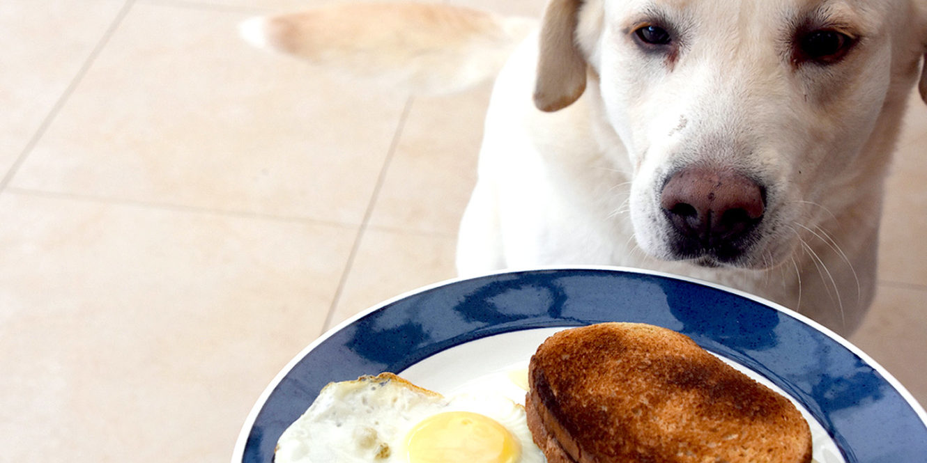 Is Sourdough Bread Bad for Dogs?