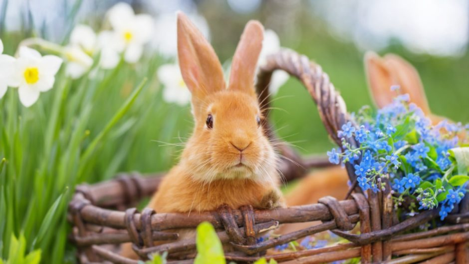 cute rabbit names for spring