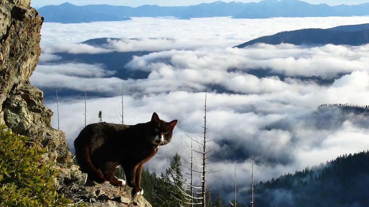 burma the adventure cat