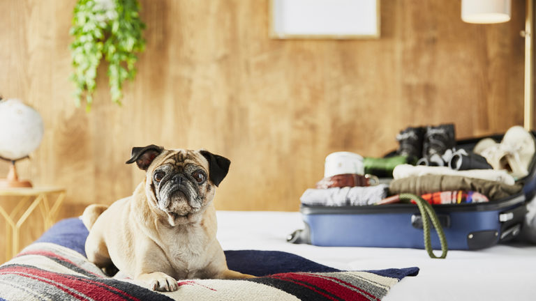 Getaway cabin planning with your pup