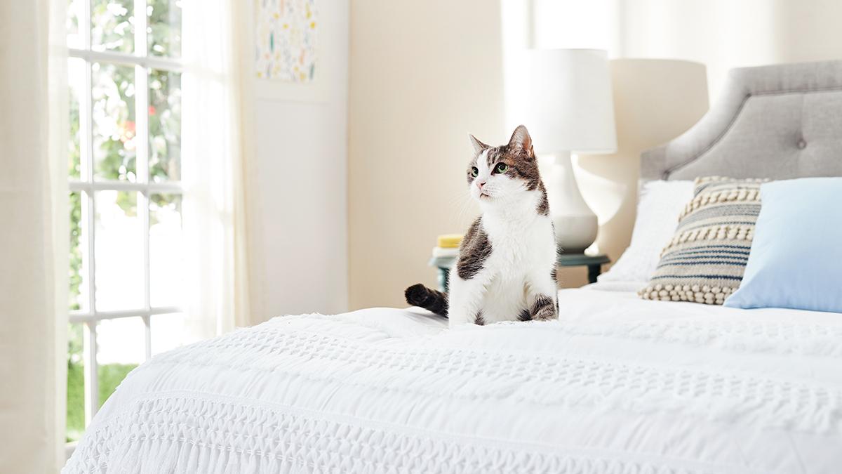 senior cat age