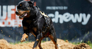 Tough-Mudder-and-Chewy-Partner-to-Bring-Ruff-Mudder-to-Dogs-Across-the-Country-HEROO