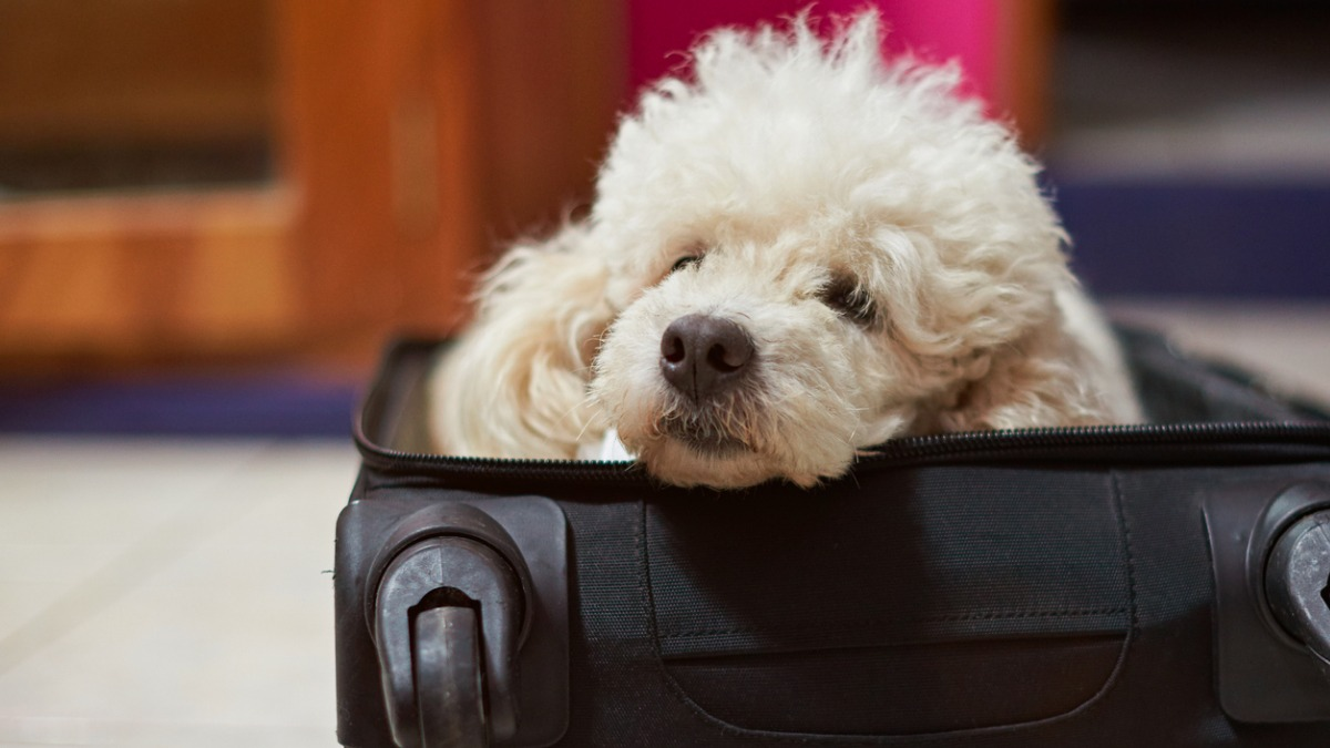How To Rehome Your Dog Or Cat