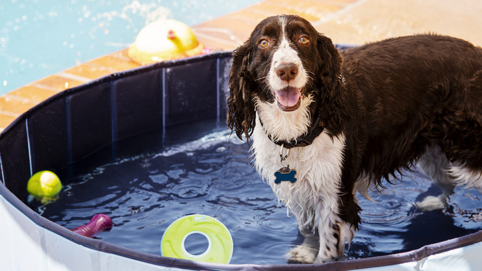 Turn Your Backyard Into A Dog Water Park