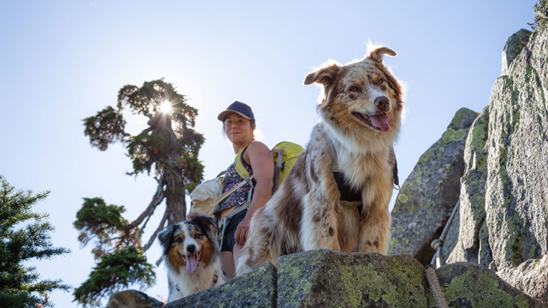 dog friendly summer activities