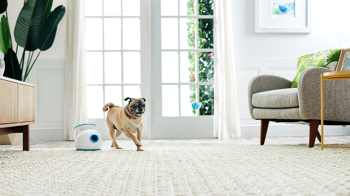 pet gadgets to help senior dogs
