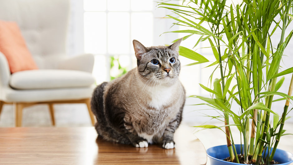cat with bamboo plant