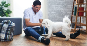 10 Great Dog Dad Gifts for Fathers Day