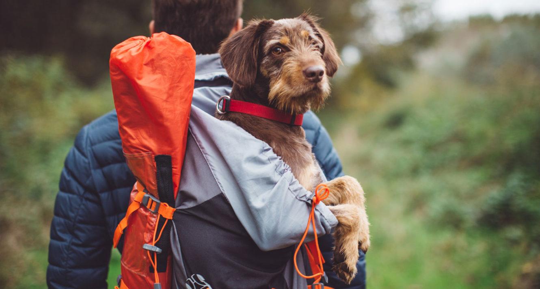 dog hiking gear