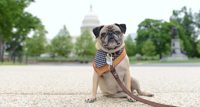 Getaway outside of washington pet-friendly HERO