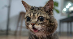Lil Bub in all her glory