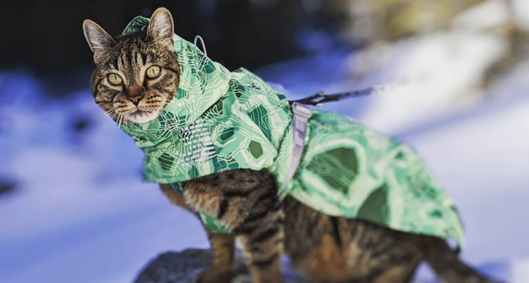 Senior cat Mike living his best life hiking in the snow