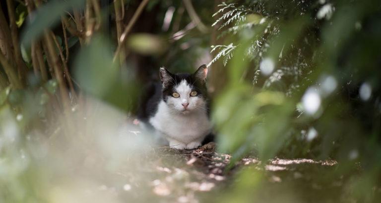 Lost cat hiding