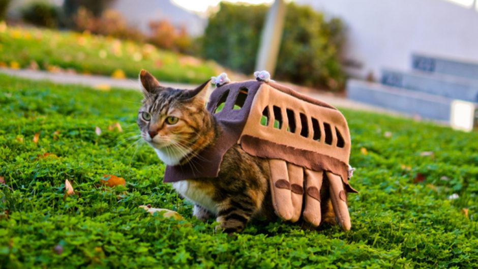 8 Diy Pet Costume Ideas For Halloween