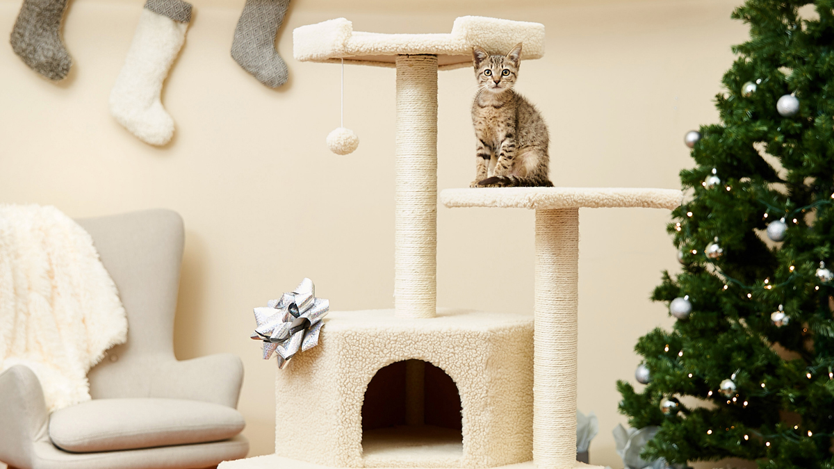 How To Keep Cats Off Christmas Trees.Holiday Safety Tips How To Cat Proof Your Christmas Tree