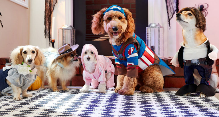 Ideas for Dog Halloween Costumes Inspired by Pop Culture