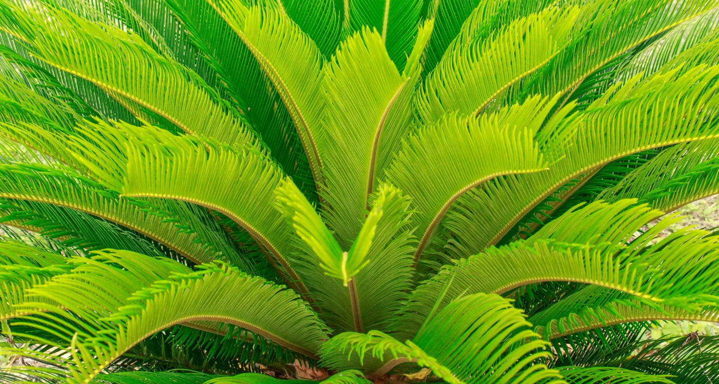 sago palm common plant toxic to dogs
