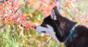 Complete Guide to Poisonous Plants for Dogs
