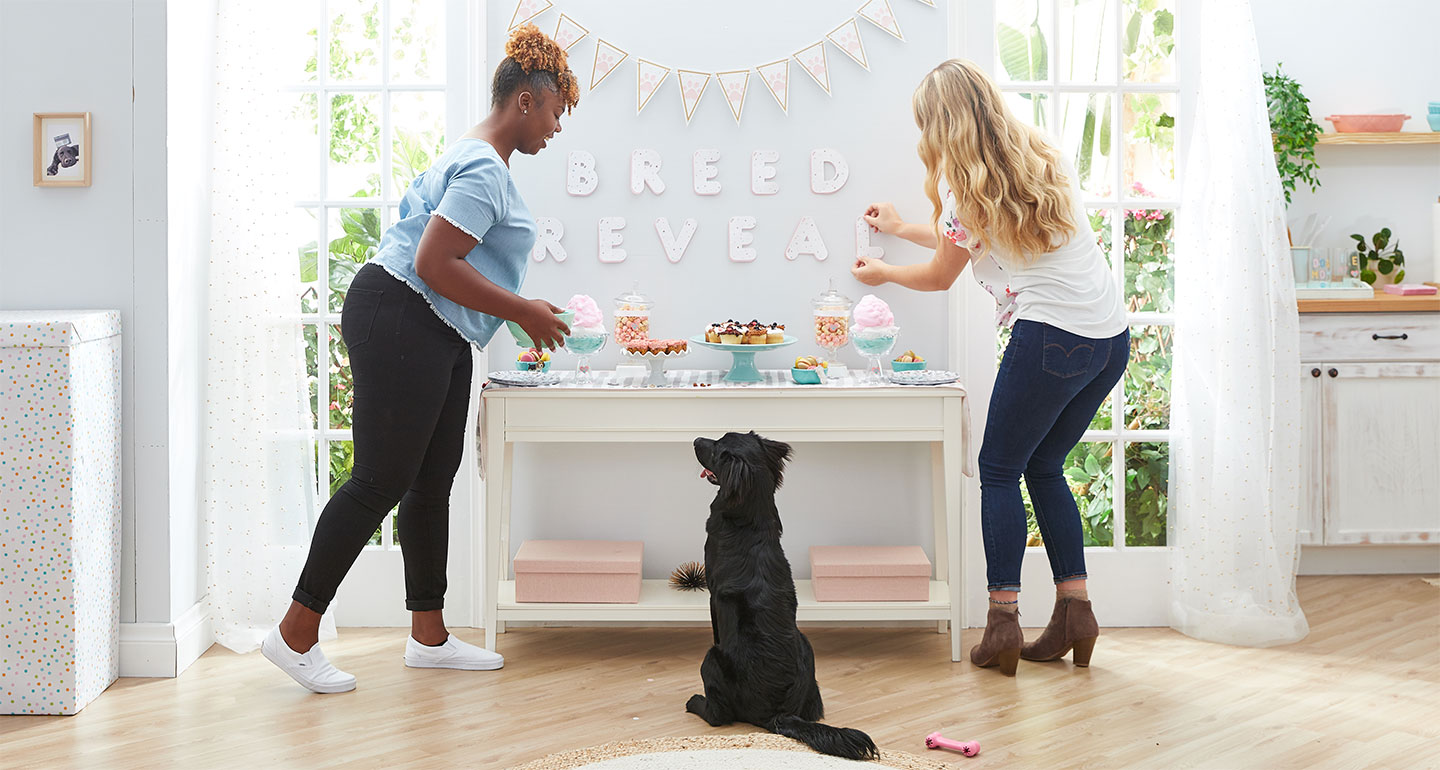 dog-breed-reveal-party-decorations