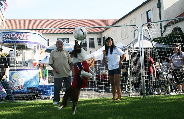 Cães de futebol ajudam filhotes motivados por bola a encontrar casas para sempre