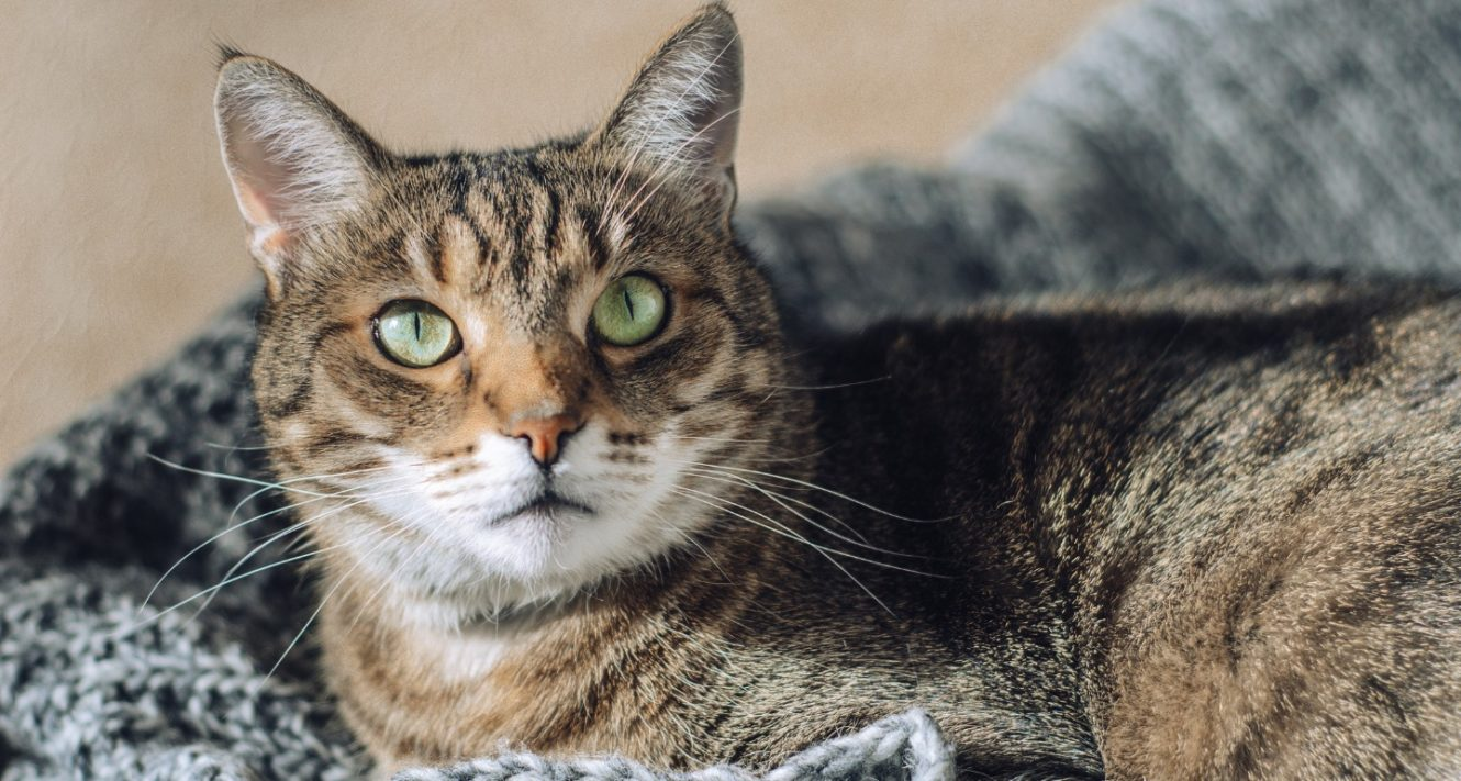 Heartworm Disease in Cats: Everything You Need to Know