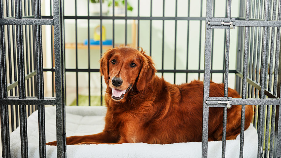 6 Escape Proof Dog Crates For Your Furry Houndini