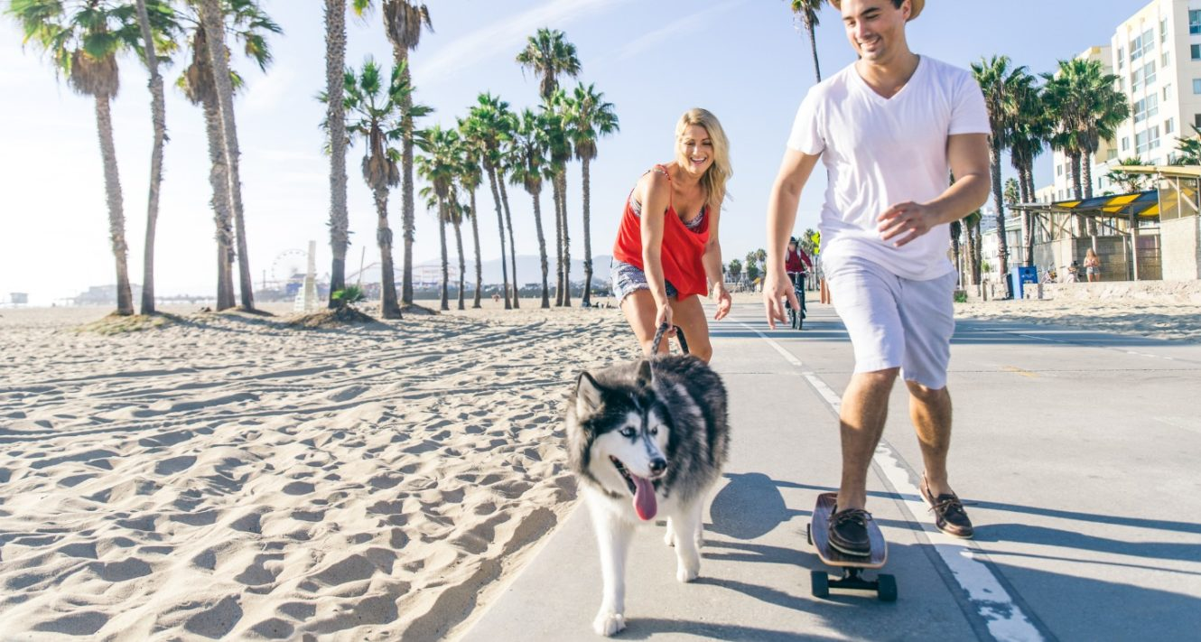 Day Trips with Dogs You Can Go On This Weekend