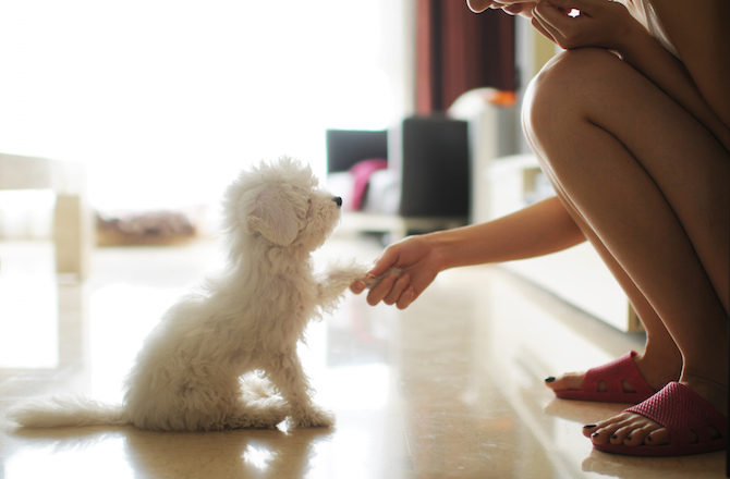5 Small White Dog Breeds That Make Great Pets