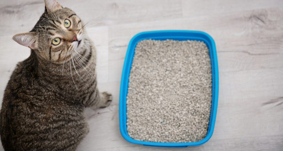 Solving Litter Box Problems In Senior Cats Pet Central By