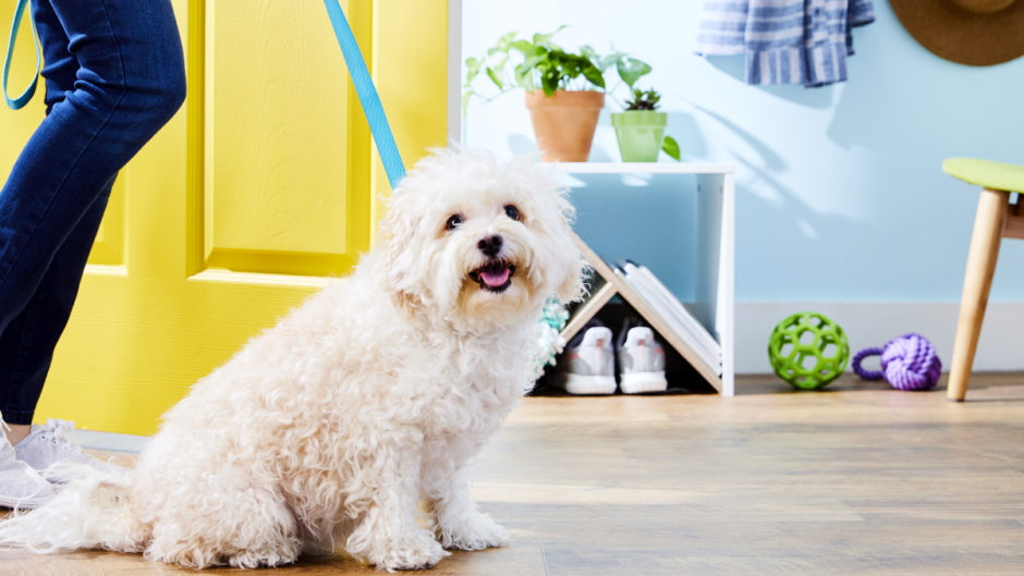 10 Tips for First-Time Dog Owners