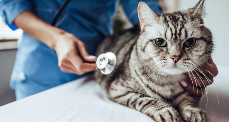 Cat Vaccinations: Everything You Need to Know