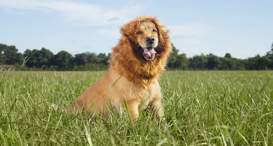 animal inspired dog costumes lion mane