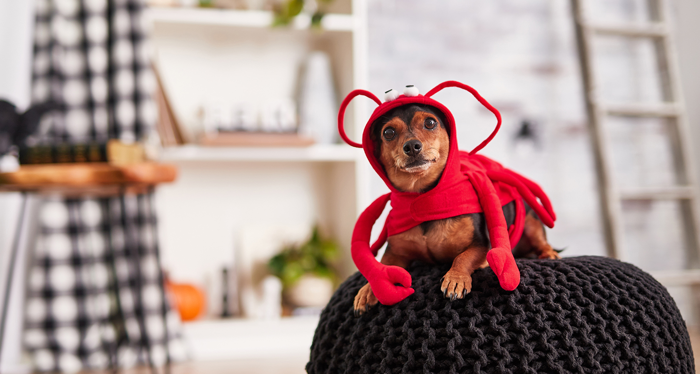 Lobster dog costume