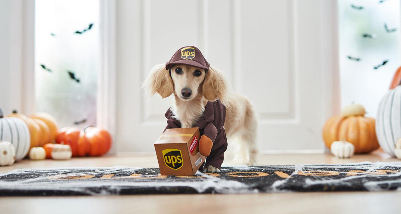 UPS driver small dog costume