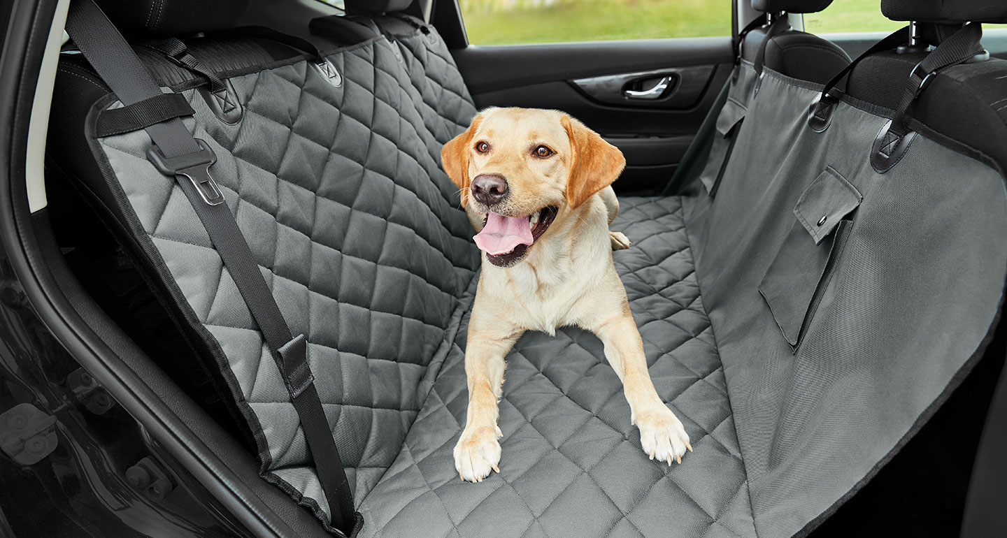 dog-on-car-seat-cover
